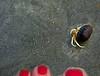 Baby Hermit Crab