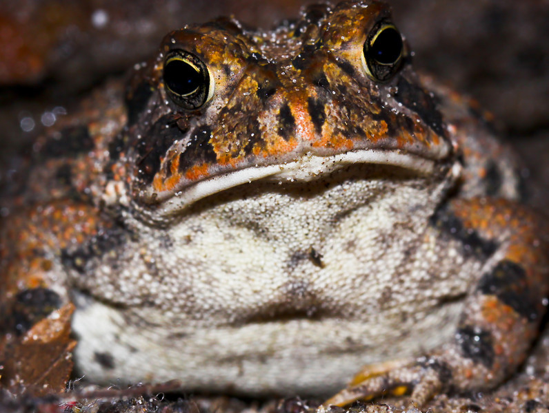I am ALL Toad. That's right!  Got it?