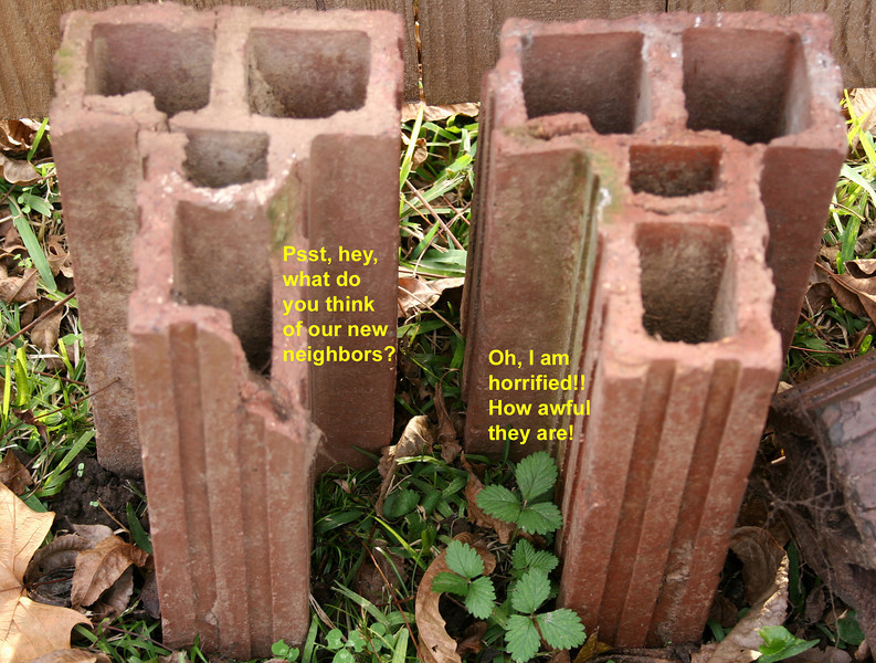 These old yard bricks looked funny to me. Who knows what they were really talking about.