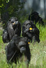 "Packed my lenses and my tripod and my extra battery and memory cards. Check, Check and Check! Of course, it would have helped if I had remembered my camera. I know! I couldn't believe it either!<br /> (This picture is a photo from there, alas not mine)<br /> Chimp Haven was a fabulous place (and a wonderful place for photos). Lots of chimps just hanging out doing their thing and very visible. It opens to the public 7 times a year. These are retired medical subjects, entertainers and overgrown ""pets"". Most have had hard lives and it is nice to see them in a better place, a kind retirement home with the chance to be just chimps. <a href=""http://www.chimphaven.org/"">http://www.chimphaven.org/</a>"
