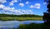 Another marsh shot.