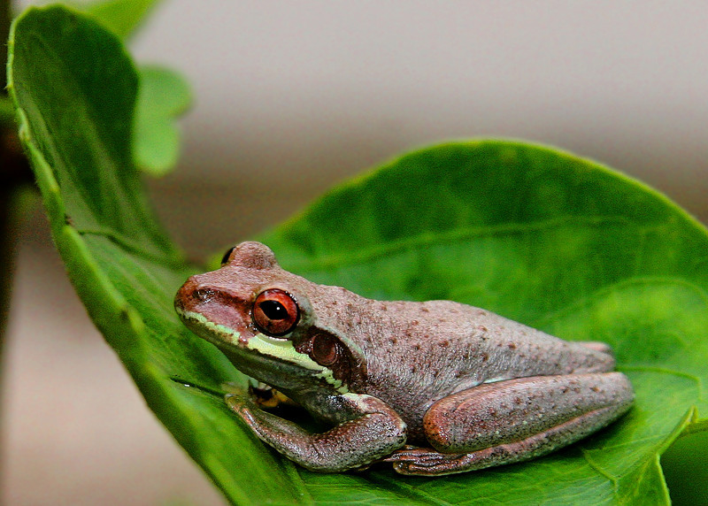 Quiet day today with no husband. Chilled like this frog. Cleaned and organized and worked on a lab report. Gribbit.
