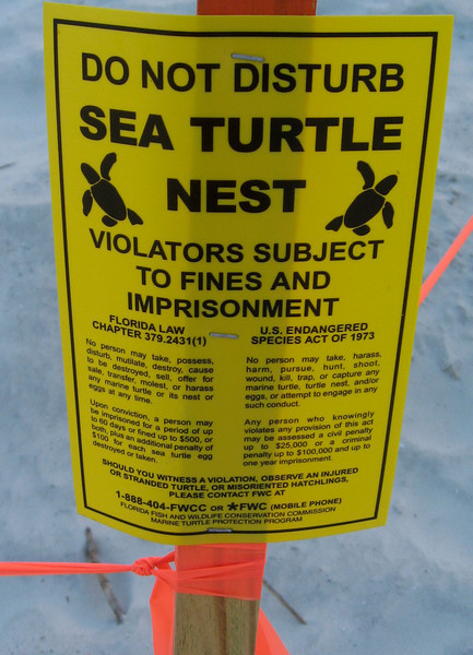 Exciting news. Roped off area where a turtle has laid her eggs at the end of our street. Now to watch for the hatch-lings...