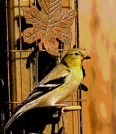 Goldfinches have taken over!