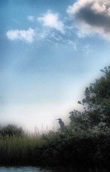 Heron on the marsh.