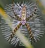 Spider designer.