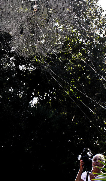 Big webs here in Florida. Bigger than me. Reminds me of the awful scene in the Hobbit.