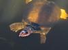 Turtle soo ugly, he's cute.
