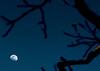 Pecan Moon