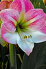 POW! Now THAT'S a flower.<br /> Put the house on the market today. <br /> I guess the move is really happening.
