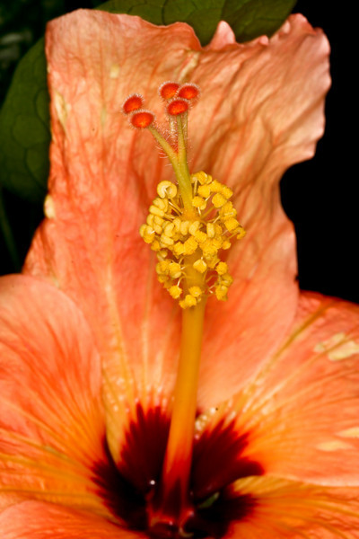 Local Hibiscus in full regalia. Is it really necessary to show off that much?