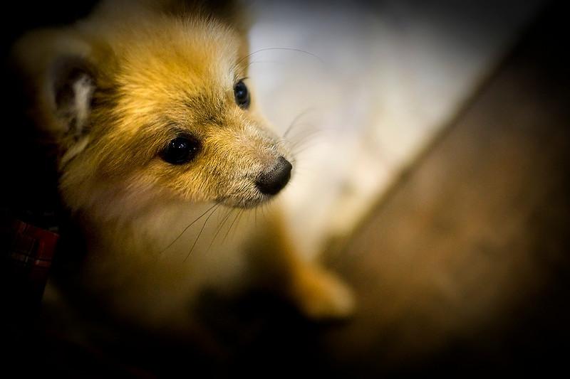 12 Sep - Puppy at Night Bazaar