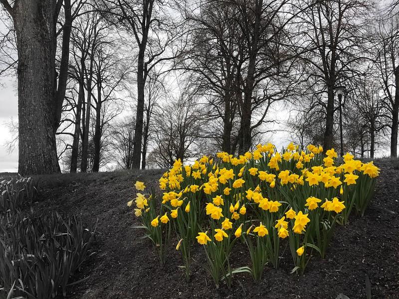 Monday Apr 17 - Spring, not yet