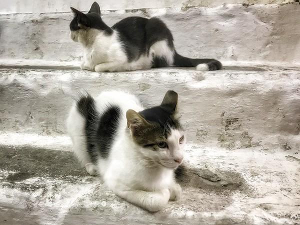 Friday Aug 03 - Karpathos Cats