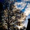 House and tree Antwerp