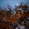 Moon over three at Ruijin Park