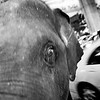 """Jumbo"" - Mon 23 June<br /> <br /> Back from office I cross the street from Landmark Hotel and go for a beer. Couple of beers later I'm met by this elephant joining me... <br /> <br /> Exciting place indeed..."