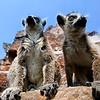 """""""Lemur"""" - Sun 23 Mar<br /> <br /> Today we drove out to Shanghai Wild Zoo together with Kevin plus family. Beautiful day and the kids loved it, especially the place where you get to feed the lemurs."""