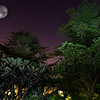 """Garden"" - Wed 19 Nov<br /> <br /> Put the camera on tripod and then used the flash to light up the trees in our garden, then copied the moon from Friday's moon pictures... Struggling to keep up the picture of the day project, but only six weeks left now... Wonder what project I'll do for next year?<br /> <br /> Tomorrow morning off to Malaysia again"