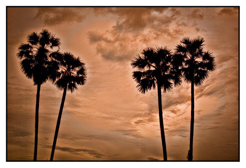 Trees Cambodia