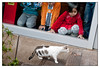 Sat 14 Jan - Feeding the Cat<br /> <br /> Lunch at Hooters Pudong side, and then some shopping. The kids wanted to feed the stray cat with some ham from the restaurant. Cat too scared to show up unless kids were inside behind the glass..