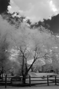 I'm after an elusive IR shot that I have in my mind of the branches on a willow tree blowing during a long exposure.  This is not exactly what I had in mind but I'll call it the picture of the day.