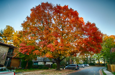 Now this is a tree for the fall