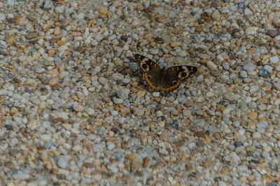 It is it a moth or a butterfly?