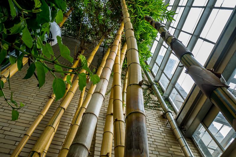 Love the giant bamboo US National Botanic Gardens