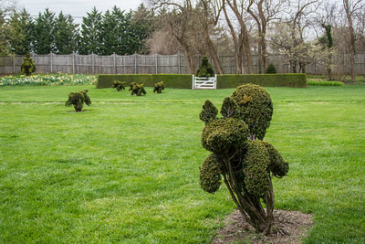 Run, fox run! A fox hunt immortalized in topiary