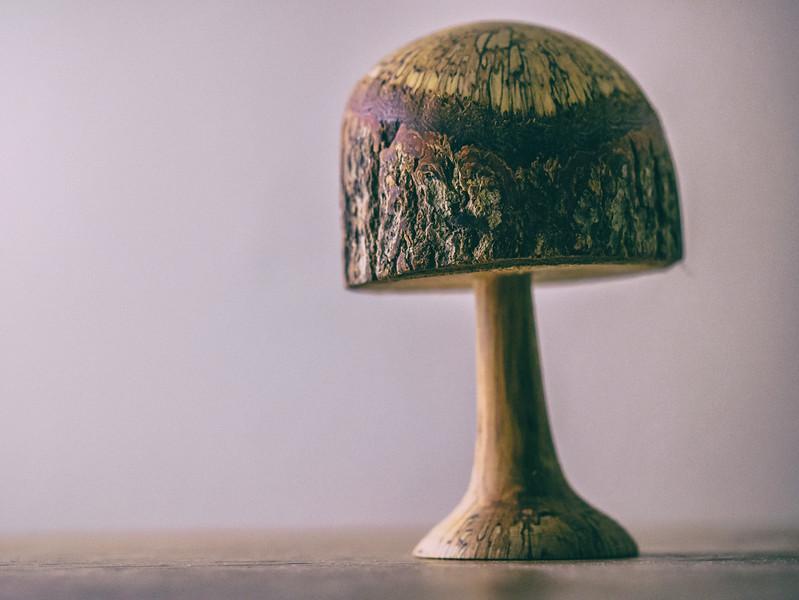 A tree or a mushroom?