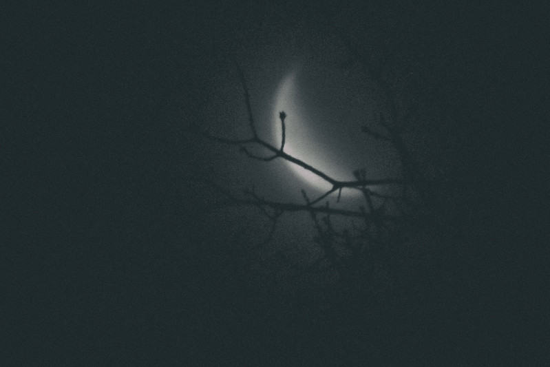 A very noir shot, branches in front blurry crescent moon