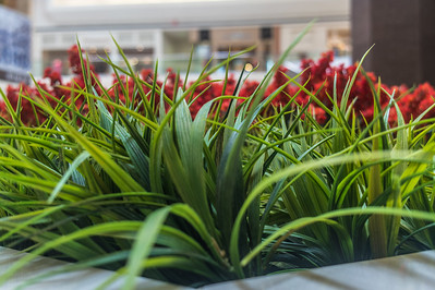 This mall is trying to bring a little nature inside