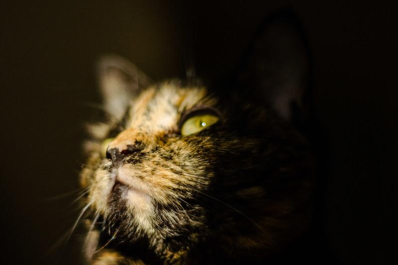 Ada in the evening light