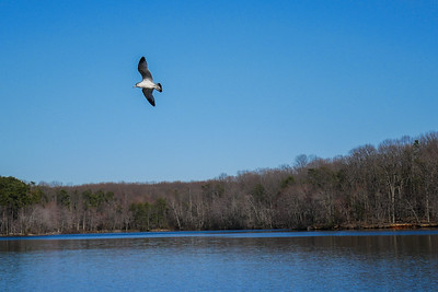 Gorgeous day if a bit chilly. The birds at Burke Lake were pretty active.
