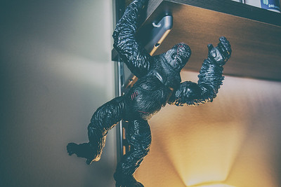 Kong just hanging out