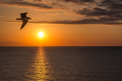 Early morning gull offers picturesque sunrise