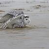 February 11 2014 - Splish Splash I Was Taking A Bath
