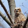 June 7 2015 - Owl