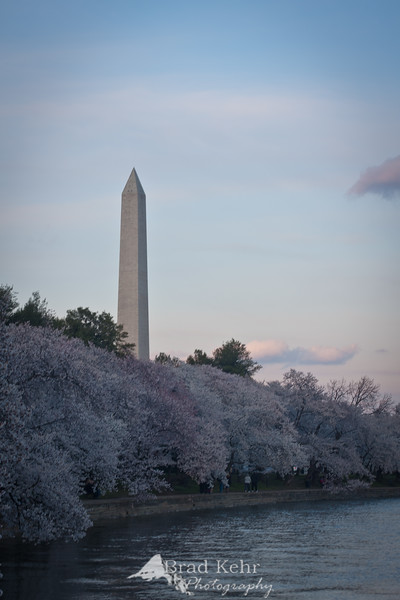 Cherry Blossoms - Washington Monument and the Tidal Basin - Washington, DC