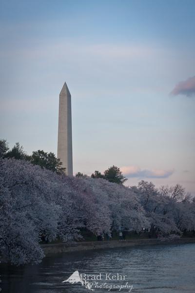 Cherry Blossoms - Washington Monument and the Tidal Basin - Washington, DC