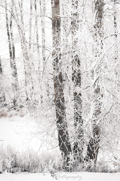 Winter in Montana.