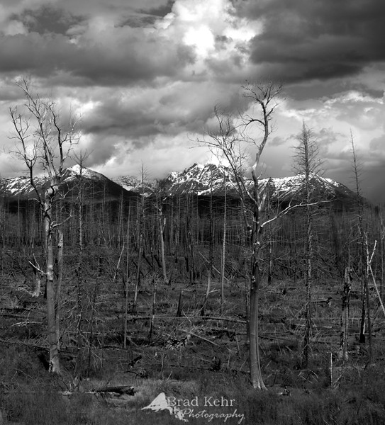 West Glacier National Park, Montana.<br /> <br /> This is a few years after a fire swept the region. Had to stop and catch the deep brooding clouds over this scene.