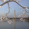 Washington Monument during the Cherry Blossoms - Tidal Basin, Washington, DC.