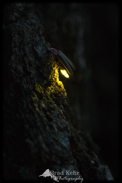Illuminating!<br /> <br /> Being a kid again - catching fireflies like I used to in Grandma's backyard.
