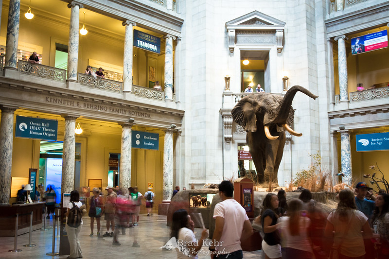 The Smithsonian Natural History Museum Foyer.