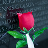 Remember those today who have given the ultimate sacrifice and reflect on what you have both gained and lost in their heroism.<br /> <br /> A rose at the Vietnam Memorial Wall - Washington, D.C.