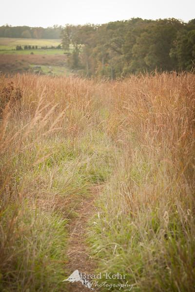 A path through the fields.
