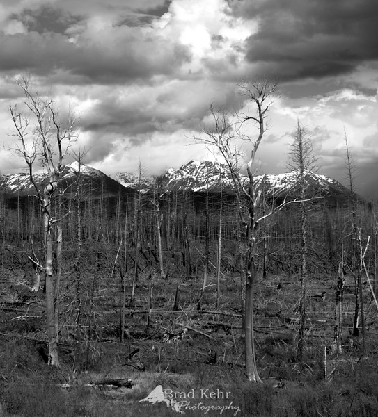 West Glacier National Park - recovering from a burn over in the last decade.
