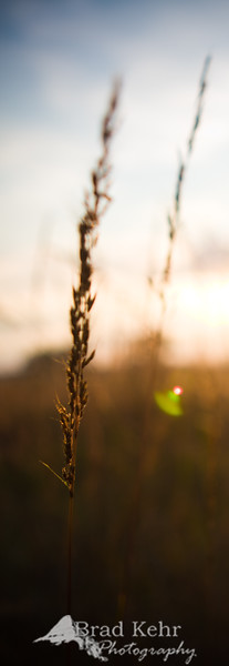 Grass in the Evening Sun - Gettysburg National Battlefield, Pennsylvania.
